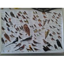 Aves dos Nossos Jardins